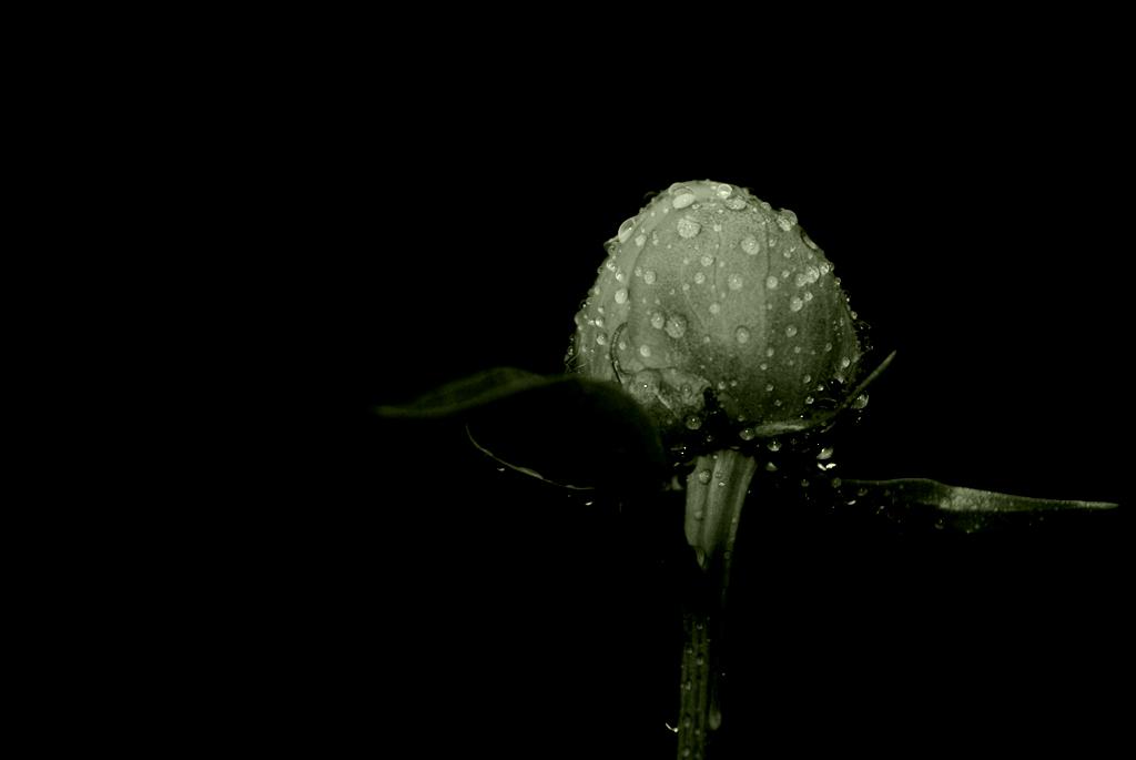 Monochrome Natur